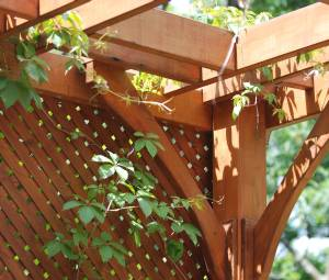 Pergola with latticce screen covered by hanging grapevines
